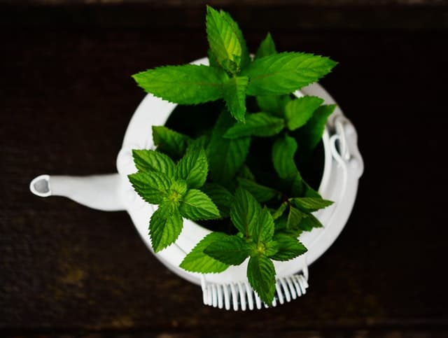 peppermint for weight loss